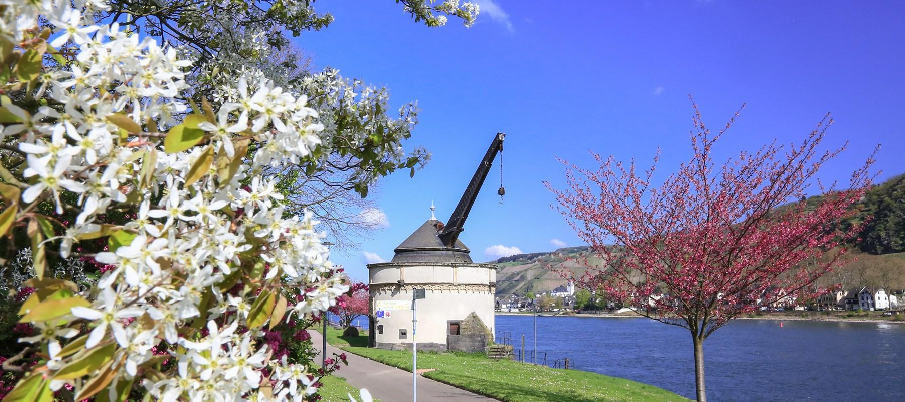 Veranstaltungen Kultur Andernach Tourismus